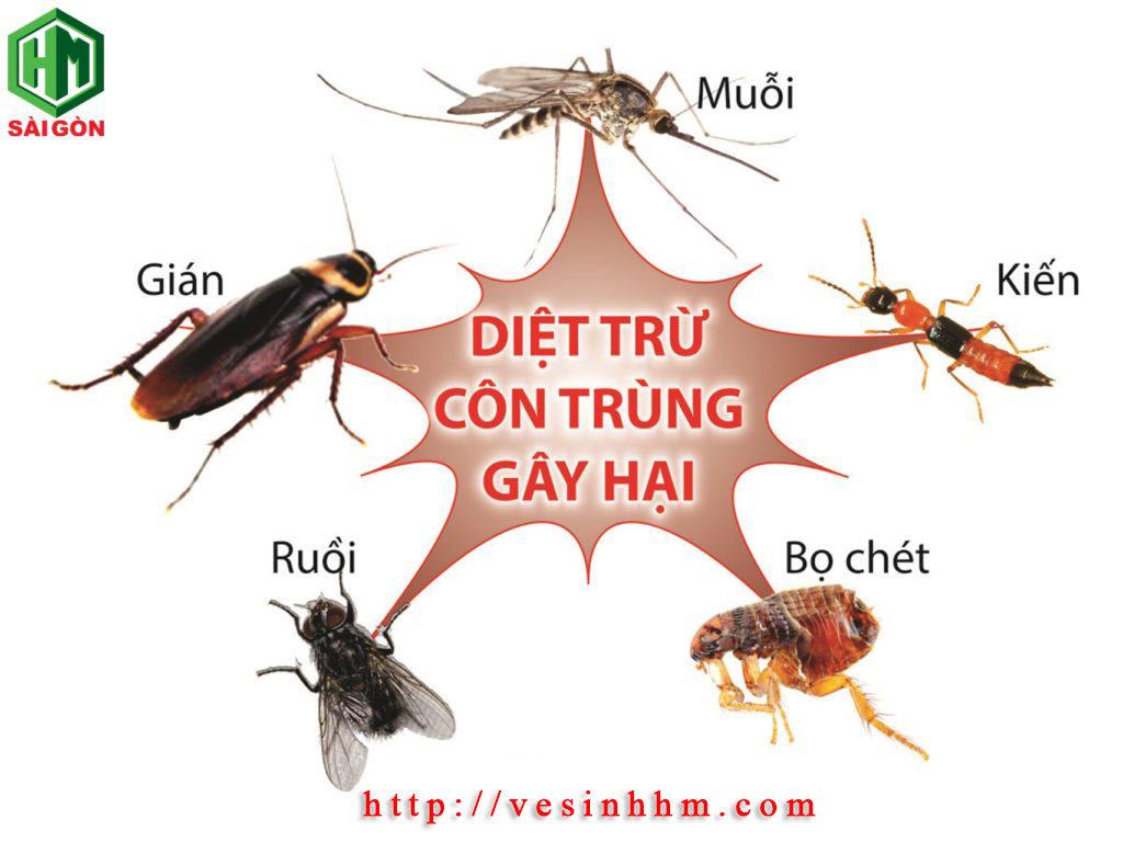 Công ty diệt côn trùng - Hoàn Mỹ Sài Gòn